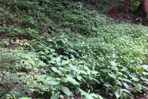 植物の生息環境も悪化の一途をたどっている(写真はイメージ)
