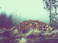 熱帯林の減少